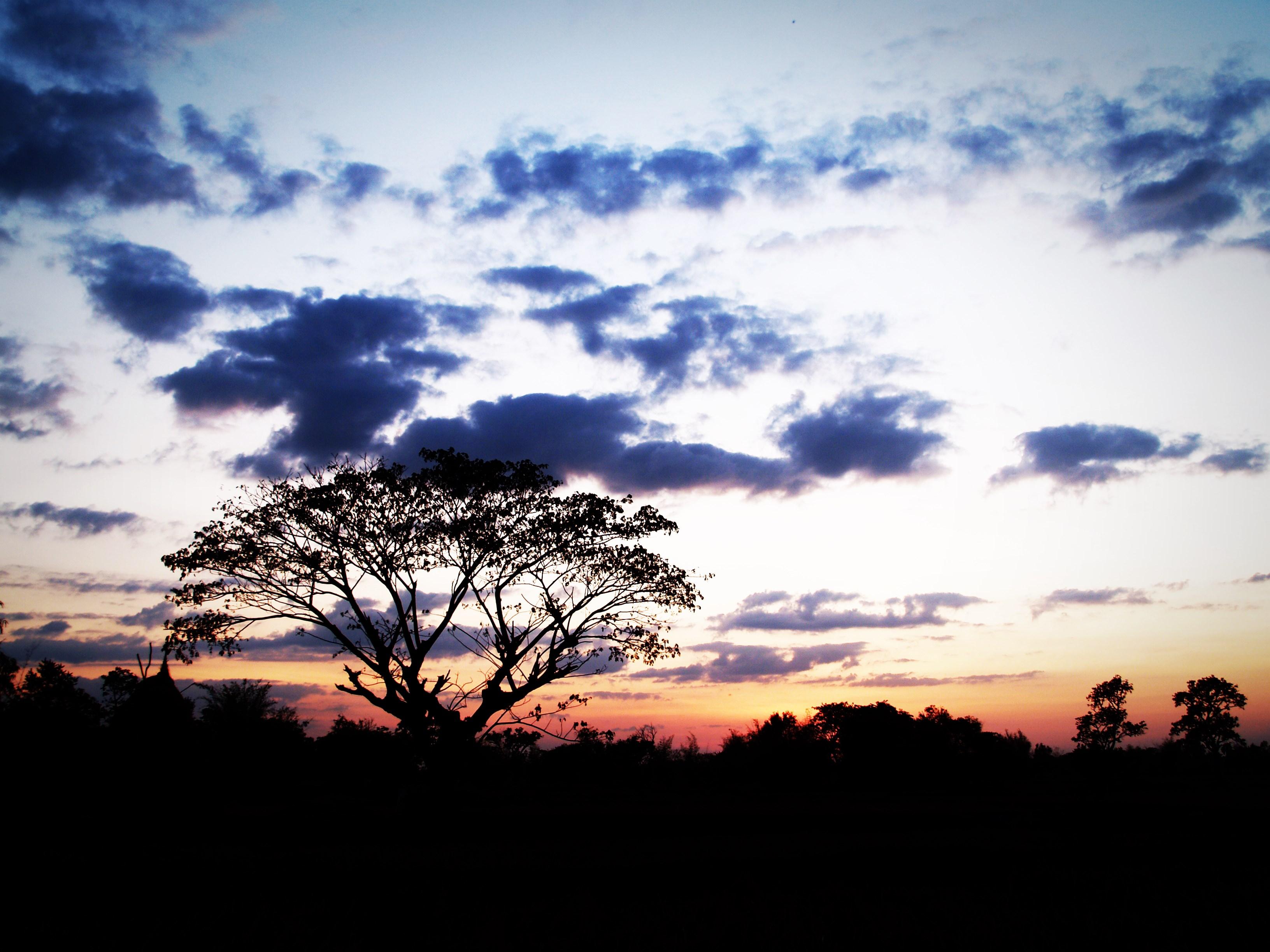 landscape sunset silhouette tree